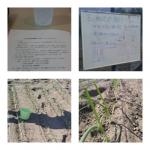 【農園プロジェクト2014】北海道フードマイスターの独り言 2014.05.10