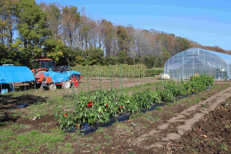 いきいきファーム 2015年10月◆秋の農園とじゃがいも収穫◆
