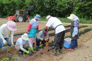 いきいきファーム ◆農業体験ができる札幌市のモデル事業◆