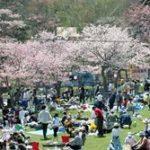 2019年 5月11日~5月19日 第70回あっけし桜・牡蠣まつり