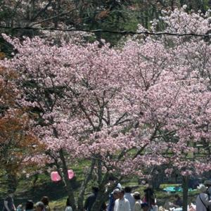 第67回あっけし桜・牡蠣まつり