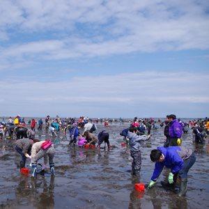 2020年 5月 9日~ 別海町尾岱沼潮干狩りフェスティバル 開催中止