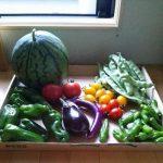 【農園プロジェクト2013】今日の収穫 2013.08.13