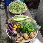 【農園プロジェクト2013】秋の収穫祭 2013.08.31