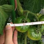 【農園プロジェクト2014】トマト 2014.07.12