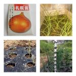 【農園プロジェクト2014】北海道フードマイスターの独り言 2014.07.23