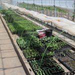 ◆平成30年度いきいきファーム研修生募集中◆農業体験講座を受講してみませんか