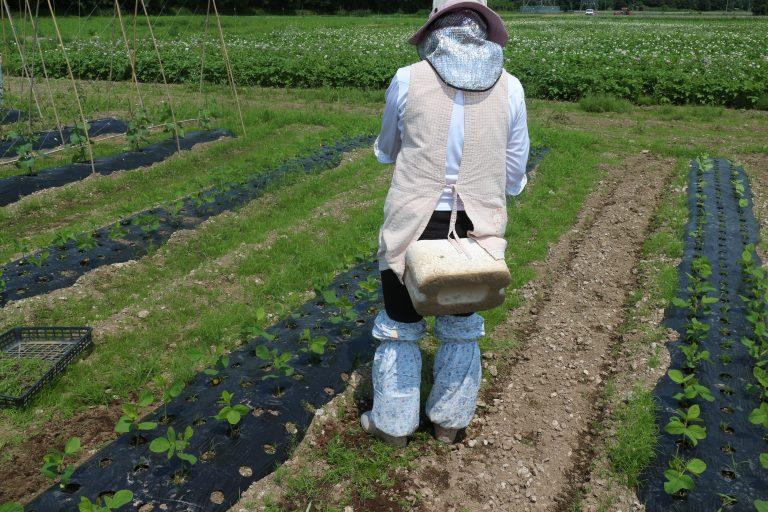 いきいきファーム 2017年 7月◆夏の農園は緑いっぱい!じゃがいもの花も咲いていました◆