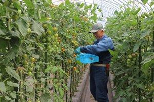 いきいきファーム 2017年 8月◆直売所が営業を開始!新鮮お野菜並んでいます◆