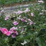 いきいきファーム 2017年 8月◆まだまだ暑い!太陽の光がまぶしい農園でした◆