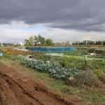 いきいきファーム 2018年 10月◆雨の日の訪問 まだまだ収穫は終わりません♪◆