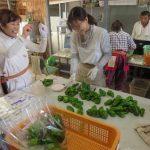 ◆平成31年度いきいきファーム研修生募集中◆農業体験講座を受講してみませんか