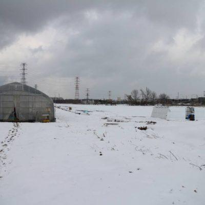 いきいきファーム 2019年3月◆今年は雪が積もる中、訪れました◆