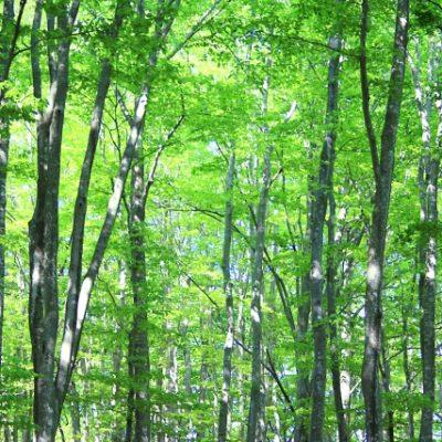 2019年5月18日~5月19日 芦別林産フェスティバル 元気森森まつり