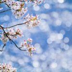 2019年5月12日 第34回おびひろ桜まつり