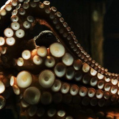 2019年 7月20日 水産まつり(うめーべやフェスティバル) 礼文島