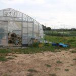 いきいきファーム 2019年8月◆お盆が過ぎ、育った作物たちの収穫が行われておりました◆