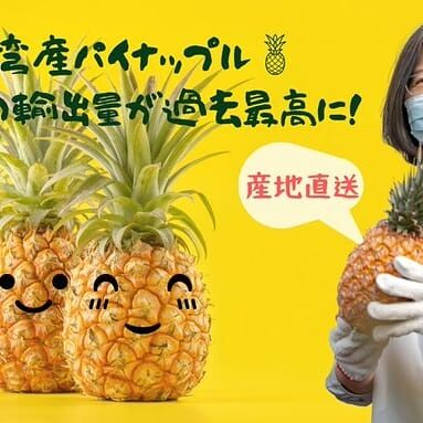 台湾産パイナップル